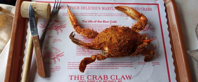 Blue Crab (5) web-format