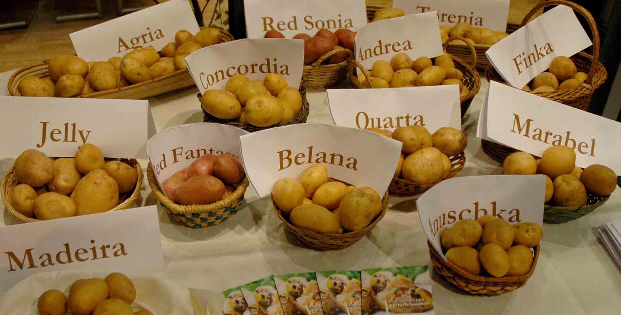 kartoffelsorten-web